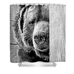 Picabear Shower Curtain