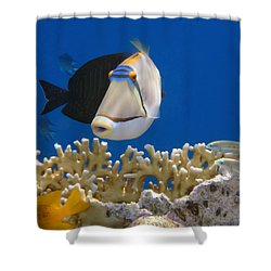 Picasso Fish And Klunzingerwrasse Shower Curtain