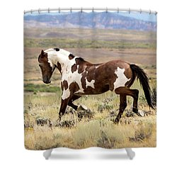 Picasso Strutting His Stuff Shower Curtain by Nadja Rider