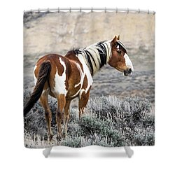 Picasso - Wild Mustang Stallion Of Sand Wash Basin Shower Curtain by Nadja Rider