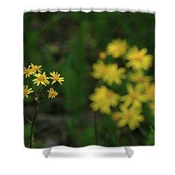Shower Curtain featuring the photograph Pick Me Daisies by LeeAnn McLaneGoetz McLaneGoetzStudioLLCcom