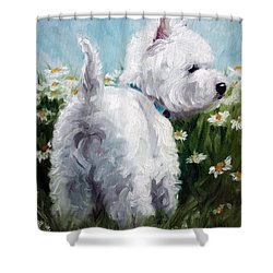 Picking Daisies Shower Curtain by Mary Sparrow