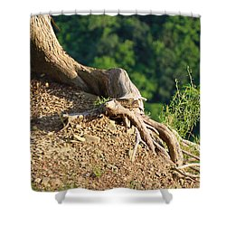 Picture Of A Tree On A Ledge Shower Curtain