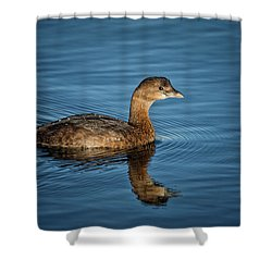 Shower Curtain featuring the photograph Pied Billed Grebe by Randy Hall