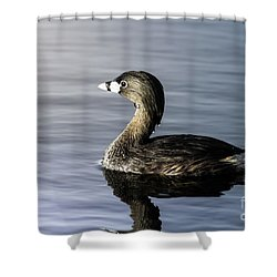 Shower Curtain featuring the photograph Pied-billed Grebe by Robert Frederick