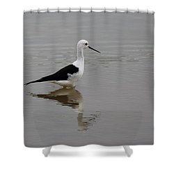 Pied Stilt Shower Curtain