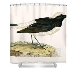Pied Wheatear Shower Curtain