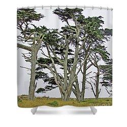 Pierce Pt. Study Shower Curtain