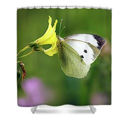 Pieris Rapae Shower Curtain