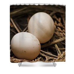 Pigeon Eggs Shower Curtain by Ramabhadran Thirupattur