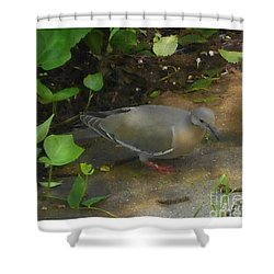 Shower Curtain featuring the photograph Pigeon by Felipe Adan Lerma