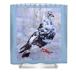 Pigeon On Ice  1 Shower Curtain by John Selmer Sr