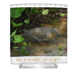 Shower Curtain featuring the photograph Pigeon Poster by Felipe Adan Lerma