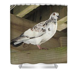 Pigeon Under Daytona Beach Pier  Shower Curtain