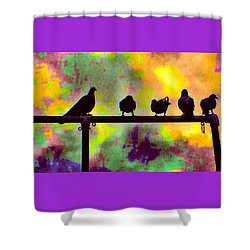 Pigeons In Abstract 2 Shower Curtain