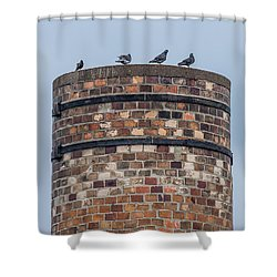Pigeons On A Stack Shower Curtain by Paul Freidlund