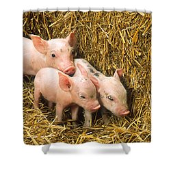 Piglets Shower Curtain by Science Source