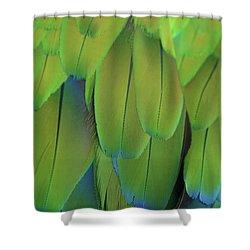 Piha Oe I Ka Maikai Shower Curtain by Sharon Mau