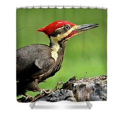 Pileated 2 Shower Curtain by Douglas Stucky