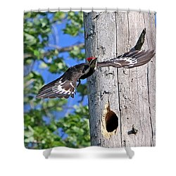 Pileated #27 Shower Curtain by James F Towne