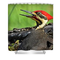 Pileated Shower Curtain by Douglas Stucky