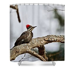 Shower Curtain featuring the photograph pileated Woodpecker 1068  by Michael Peychich