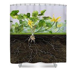 Pilewort Or Lesser Celandine Ranunculus Ficaria - Root System -  Shower Curtain