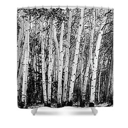 Pillars Of The Wilderness Shower Curtain by James BO Insogna