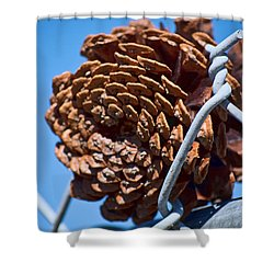 Pine Cone On The Fence Shower Curtain