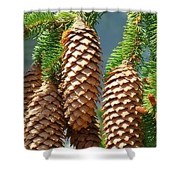 Pine Cones Art Prints Conifer Pine Tree Landscape Baslee Troutman Shower Curtain by Baslee Troutman