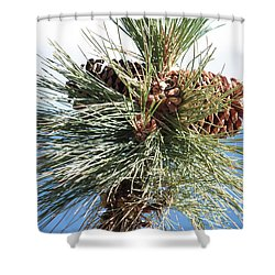 Pine Cones Over Lake Tahoe Shower Curtain by Carol Groenen