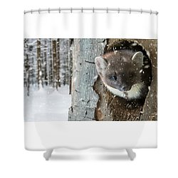 Pine Marten In Tree In Winter Shower Curtain