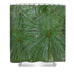 Shower Curtain featuring the painting Pine Needles by Daun Soden-Greene