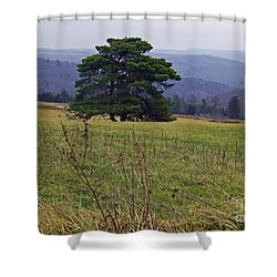 Pine On Sentry Shower Curtain