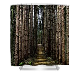 Pine Path  Shower Curtain