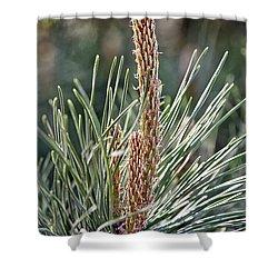 Pine Shoots Shower Curtain
