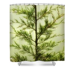 Shower Curtain featuring the photograph Pine Shower by Brian Wallace