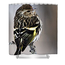 Pine Siskin Shower Curtain