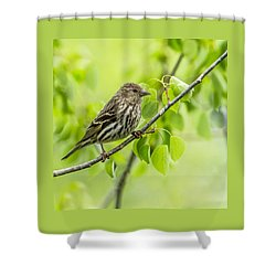 Pine Siskin On A Branch Shower Curtain by Yeates Photography