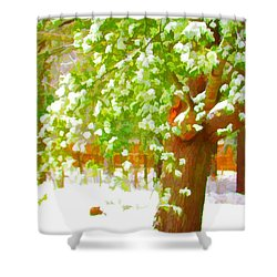 Pine Tree Covered With Snow 1 Shower Curtain by Lanjee Chee