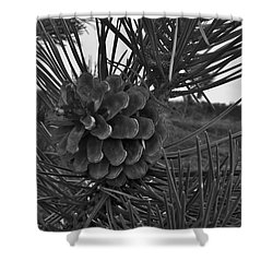 Shower Curtain featuring the photograph Pine Tree by Deborah DeLaBarre