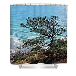 Pine Tree On Coast Shower Curtain