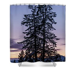 Pine Tree Silhouette    Shower Curtain