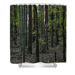 Shower Curtain featuring the photograph Pine Wood Sunrise by Skip Willits