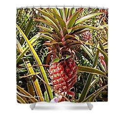 Pineapple  Shower Curtain