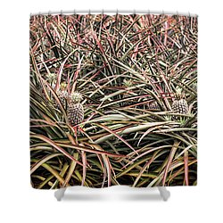 Pineapple Pano Shower Curtain by Heather Applegate