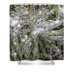 Pinecicles Shower Curtain by Barbara Bowen