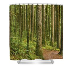 Pines Ferns And Moss Shower Curtain