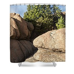 Pines In Granite Shower Curtain