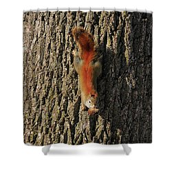 Piney Squirrel Shower Curtain by David Arment